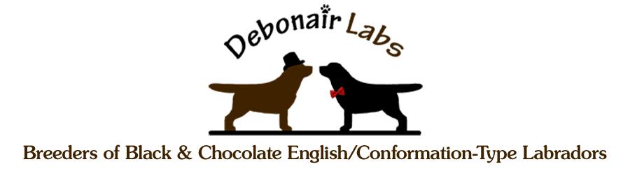 Debonair Labradors